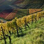 Weinfarben
